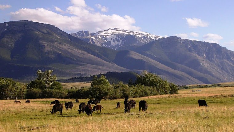 Montana Ranch - Farm - Land for Sale